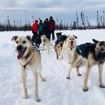 Dog Sledding: An Alaskan Adventure