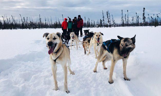 Dog Sledding: An Alaskan Adventure